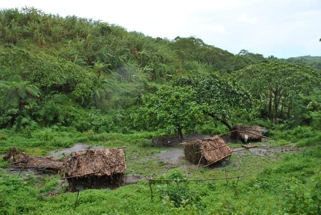 Huts Made Of Banana Leaves