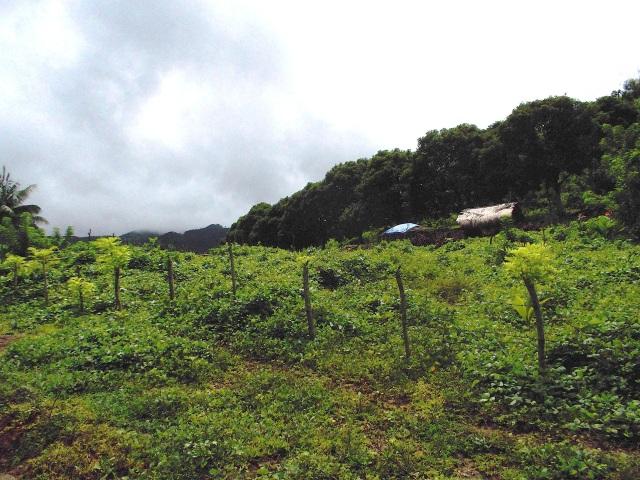 House & Farm