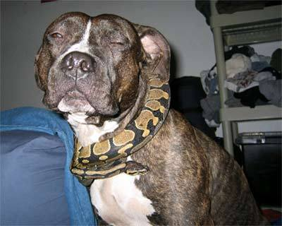 Snake On Dog (Picture From Google)