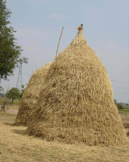 """Hay In The Barn"" Philippine Style"