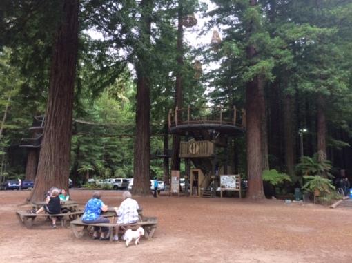 redwoods-visitors-center