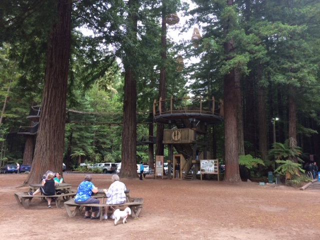 redwoods-visitors-center